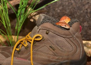 corn-snake-hiking boot pix med (2)