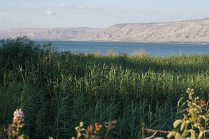 A green meadow with the Sea of Galilee in the distance.