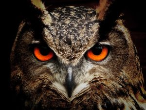 Owl's eyes staring out.