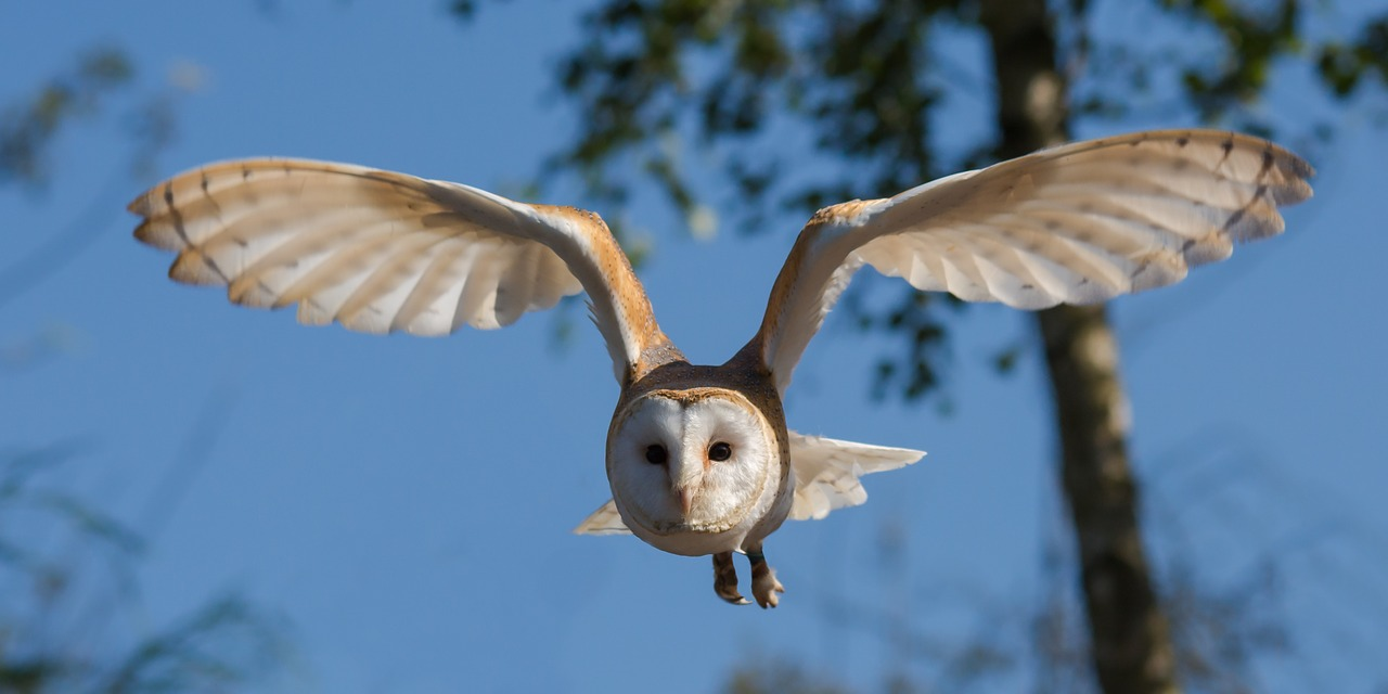 aghgrw pellets photo germany tyto barn stock hesse owl barns alba