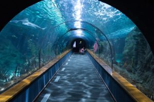The shark tunnel humans walk through in Loro Parque Theme Park in Spain.