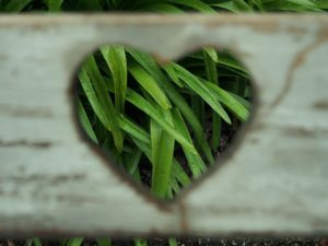 A heart-shaped hole cut into a board fence showing the green grass behind the wood.