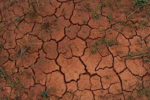 Ground with cracked, dry reddish clay soil.