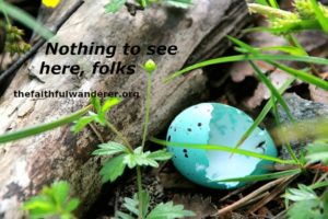 """A robin's broken and empty blue eggshell, with the words """"Nothing to see here folks."""""""