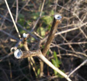 Broken off stems of tumbleweed.
