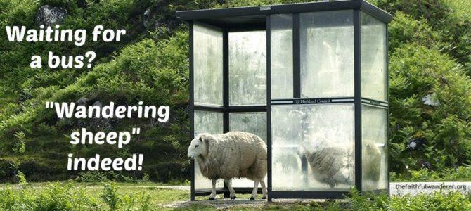 Wandering Sheep Indeed!